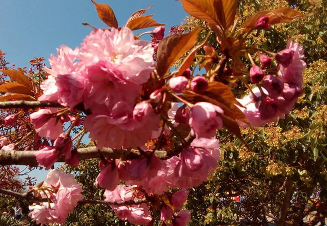 цветы ргшщ